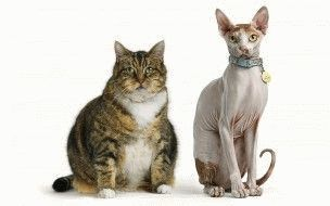 Отличия «толстого» и «тонкого» клиентов в 1С