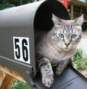Лучшие программы для рассылки писем на email